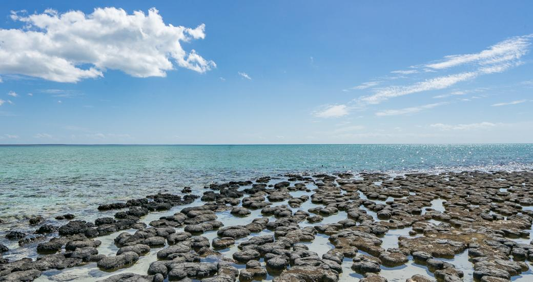 A photo looking out across the Hamelin Pool Stromatolites in the Shark Bay World Heritage Area, Western Australia. Image by Katrin Lehr