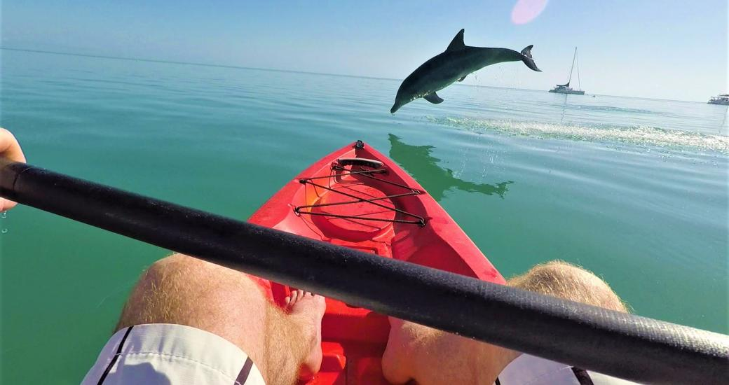 Shark Bay Monkey Mia dolphin kayaking