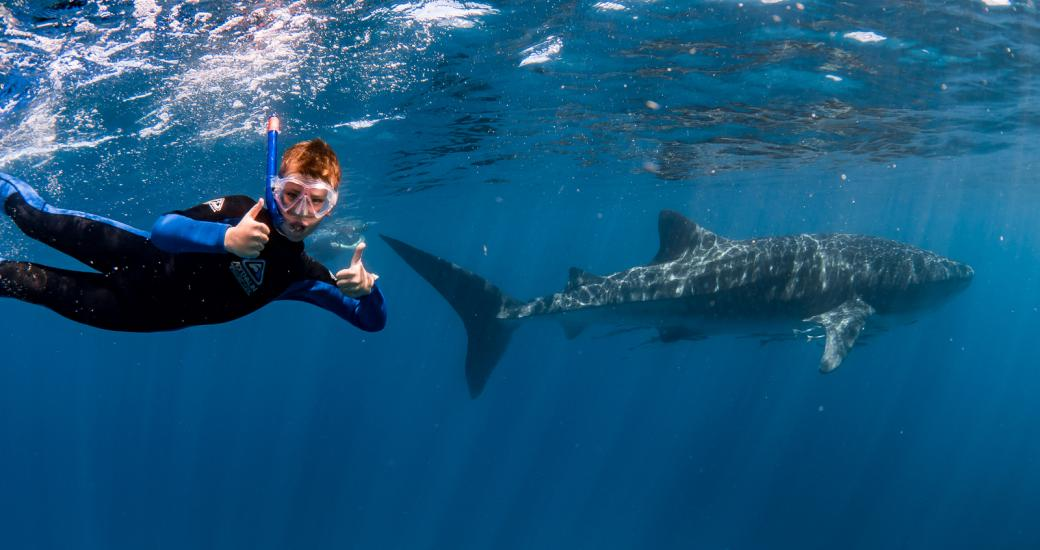 Ningaloo Discovery Whale Shark Tour boy