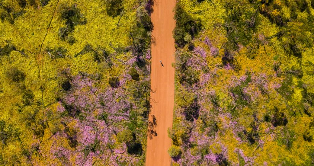 Wildflower country Coalseam Conservation Park aerial drone