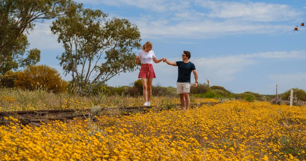 Wildflower Country Western Australia's Coral Coast