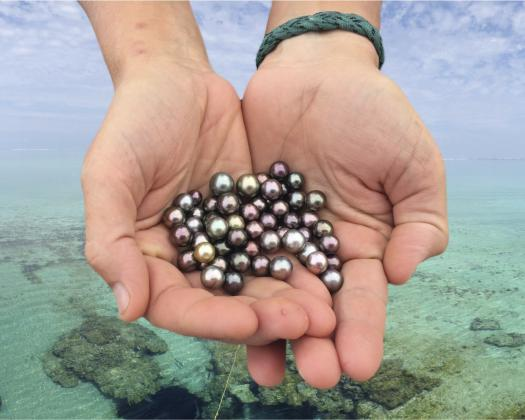 A pair of hands hold Abrolhos Islands black pearls at the Abrolhos Islands off Geraldton, Western Australia