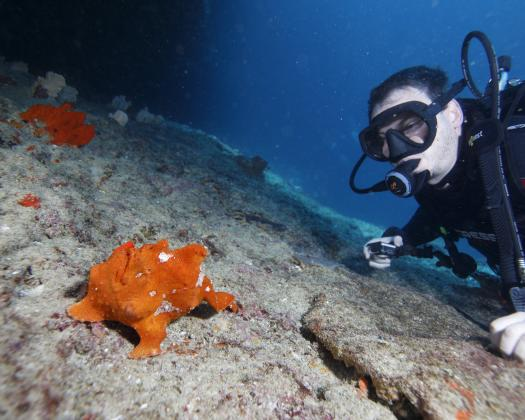 Diver and frogfish