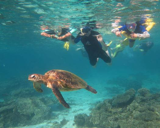 Swim with turtles and reef sharks on the Ningaloo Reef with Coral Coast Tours, Coral Bay, Western Australia