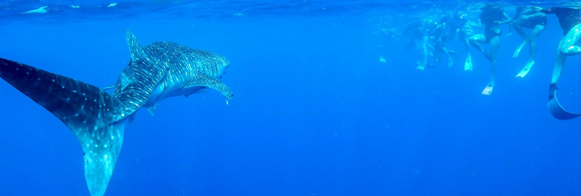 Ningaloo reef dive and snorkel australia 39 s coral coast - Ningaloo reef dive ...