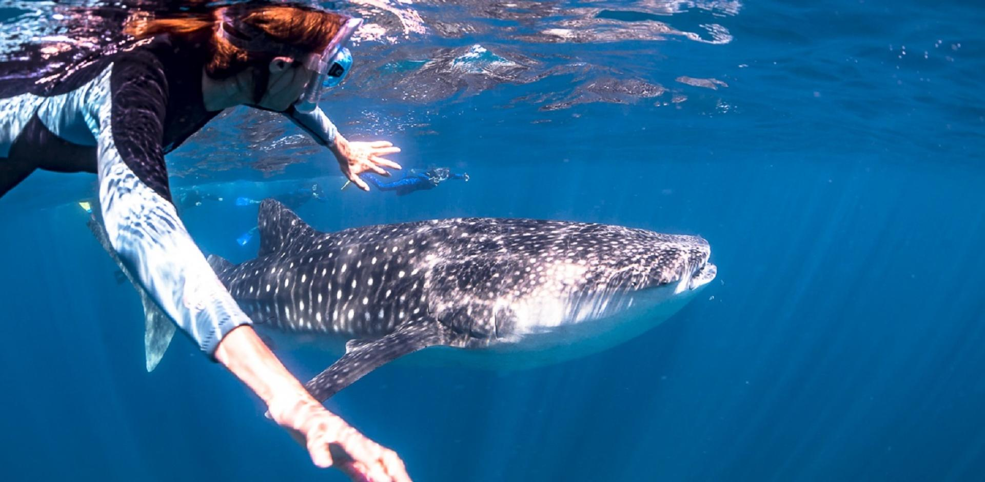 Ningaloo Discovery girl whale shark exmouth