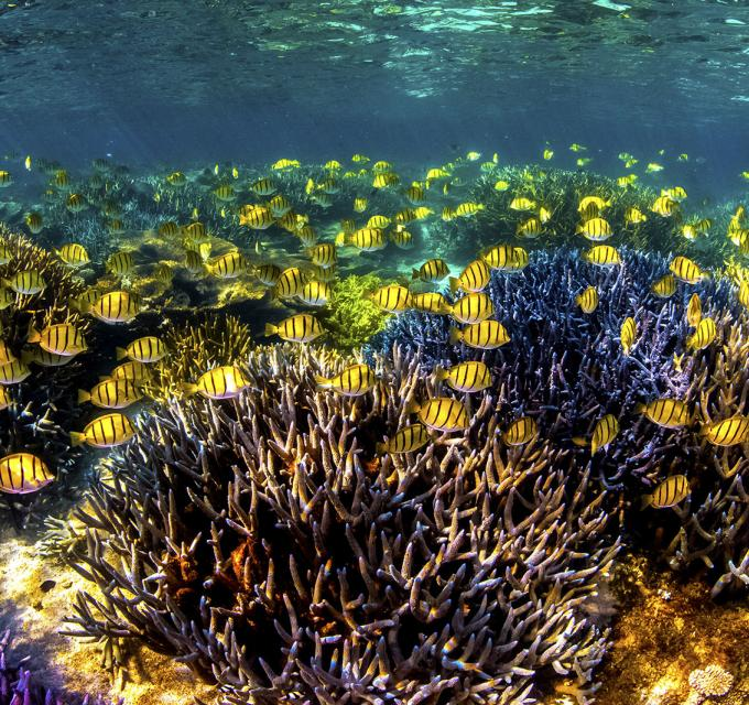 Coral reef and fish on the Ningaloo Reef, Western Australia