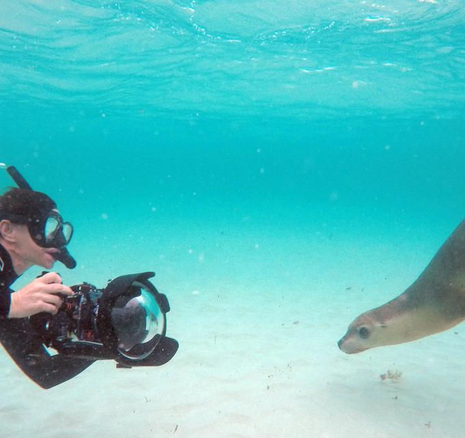 A guest on tour a Sea Lion Interaction Tour from Jurien Bay, Western Australia
