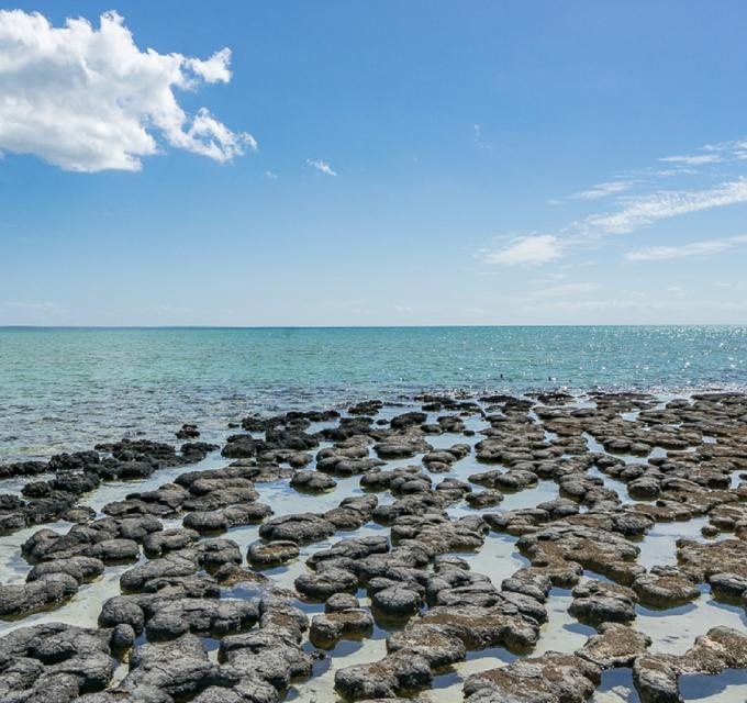 A photo of the Hamelin Pool Stromatolites in the Shark Bay World Heritage Area, Western Australia