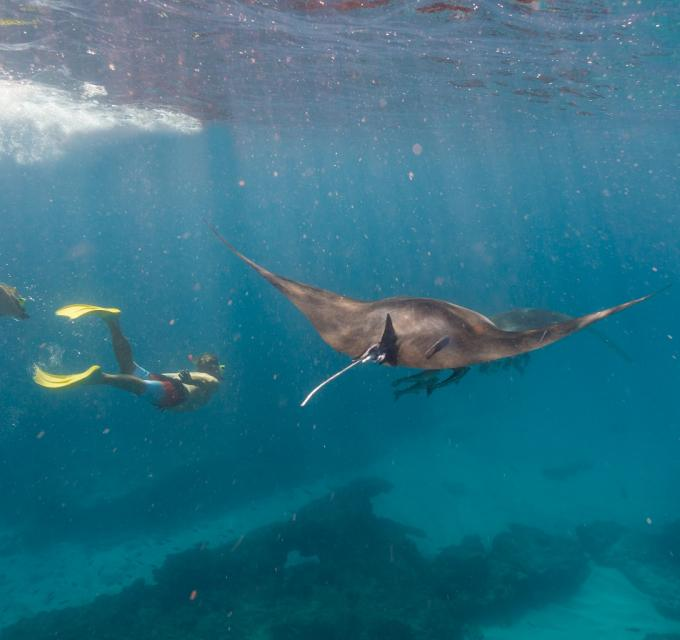 Swim Manta Ray Tour Coral Bay Ningaloo Reef Western Australia