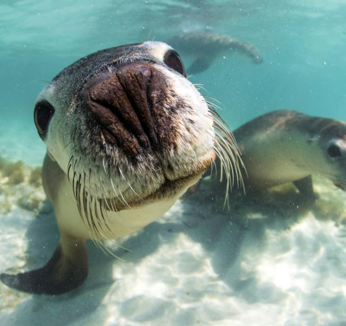 Sea lion tour with Turquoise Safaris