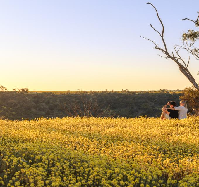 Coalseam Conservation Park Wildflower Country Western Australia's Coral Coast